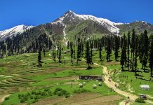 pakistan plans to plant billions of trees